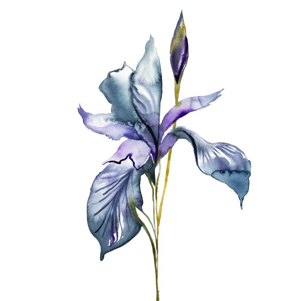 Iris No. 99 by Elizabeth Becker