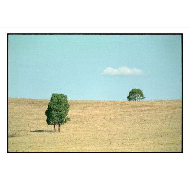 Two Trees In Gundagai by Damian Seagar
