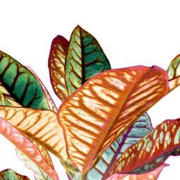 Heavenly plants Nº03 by Sumit Mehndiratta
