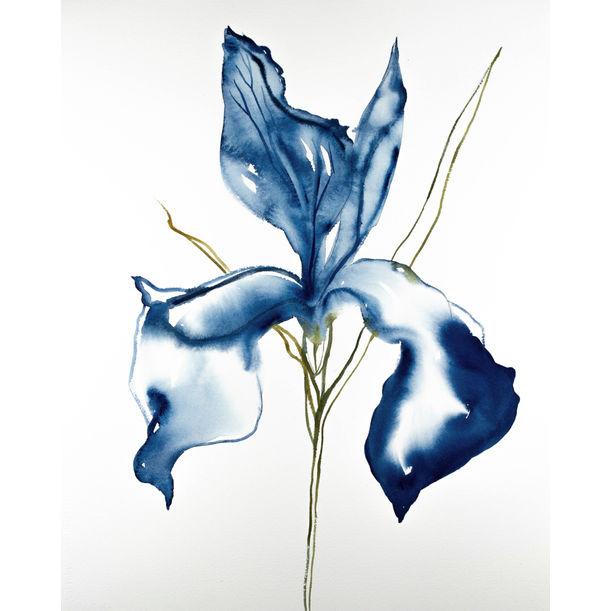 Iris No. 94 by Elizabeth Becker