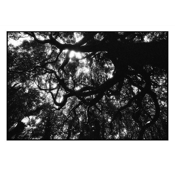 Kapiti Island Tree Canopy #5 by Damian Seagar