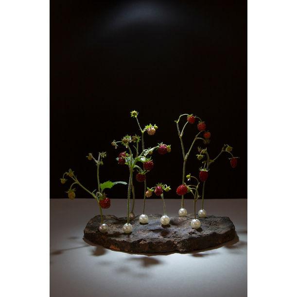 Forbidden Food - Wild Strawberries by Ana Straze