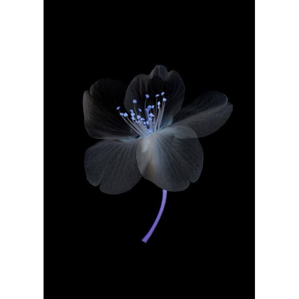 Wild Cherry Blossom by Yoichiro Nishimura