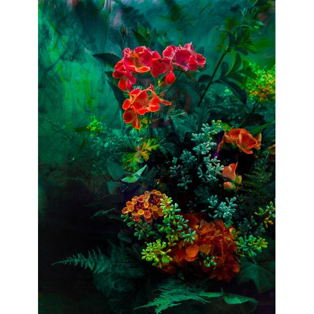 The Coral Sea by Javiera Estrada