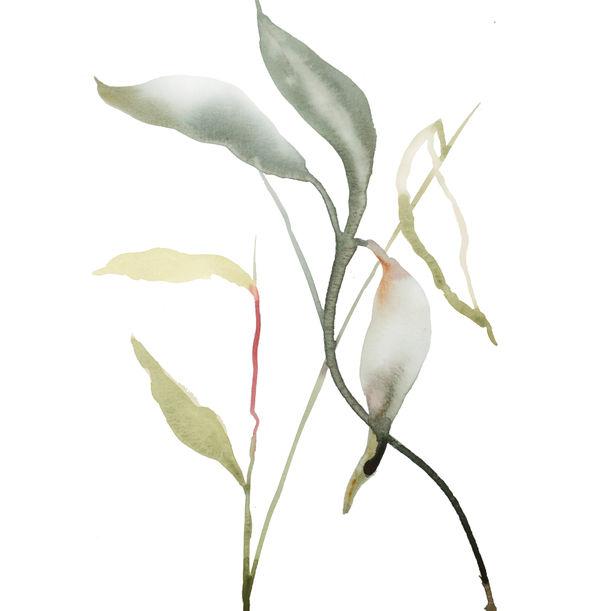 Plant Study No. 101 by Elizabeth Becker