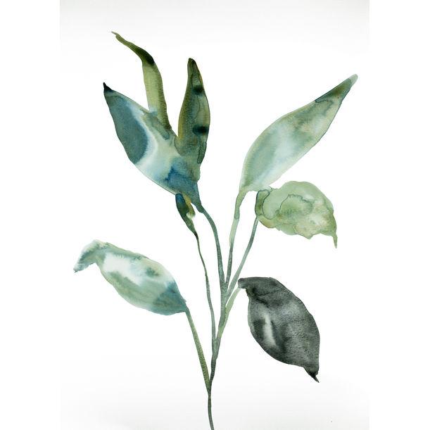 Plant Study No. 97 by Elizabeth Becker
