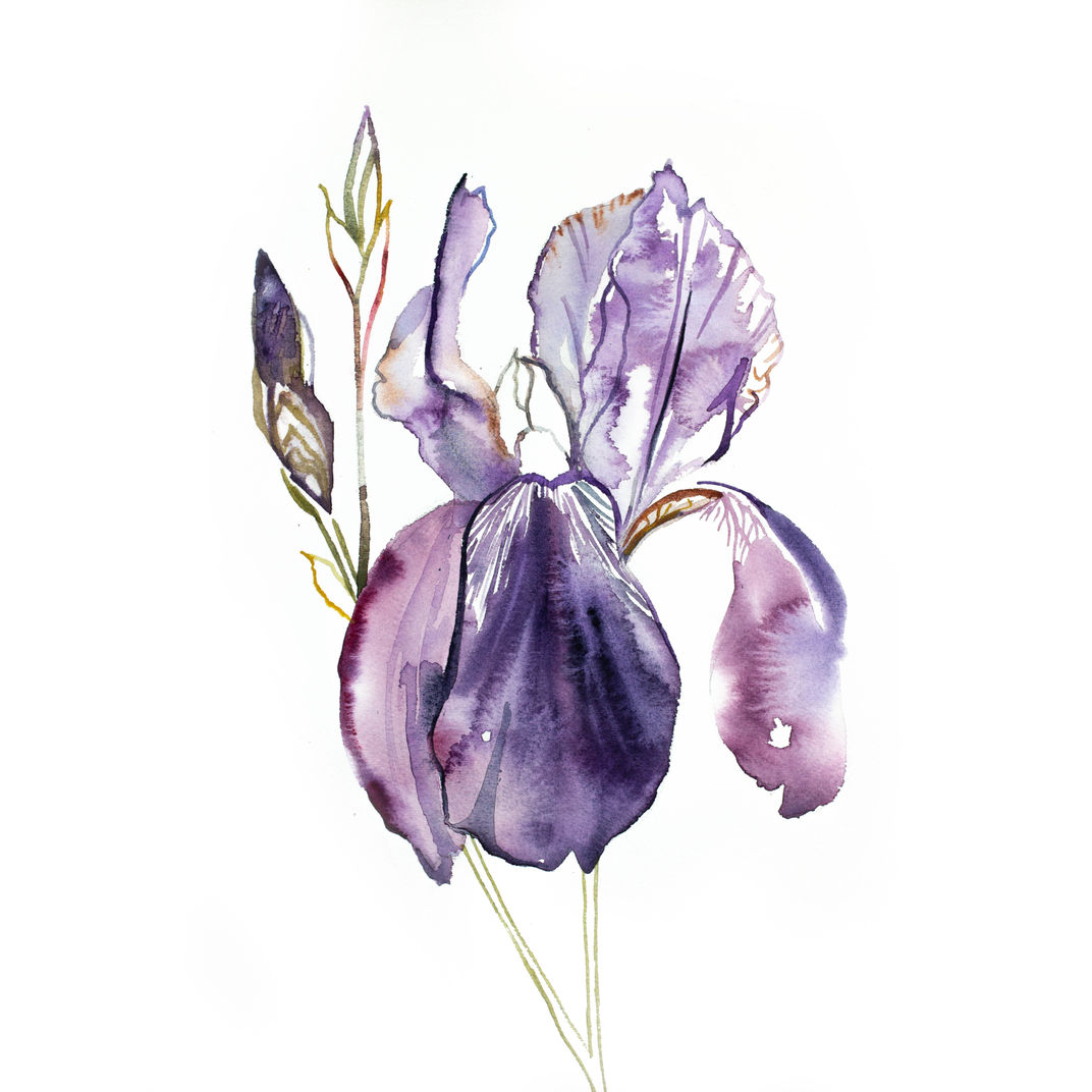 Iris No. 126 by Elizabeth Becker