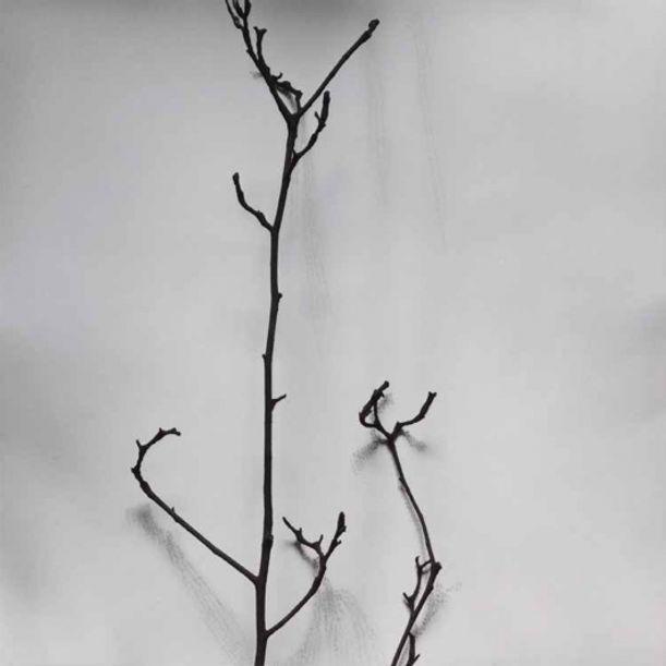 Whispers of Trees-Magnolia Denudata by Chu Chu