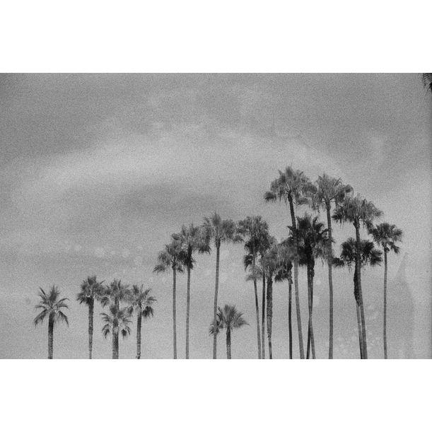 Venice Beach by gutterdust