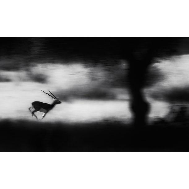 predator alert by Swapnil Deshpande