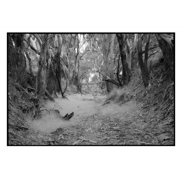 Burkes Creek by Damian Seagar