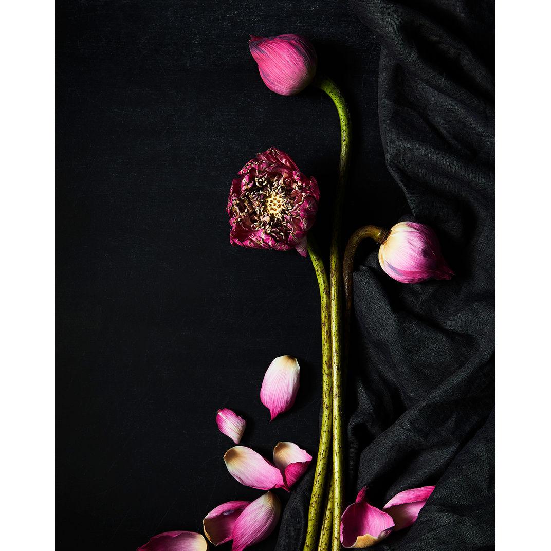 Lotuses on Black by Ty Mecham