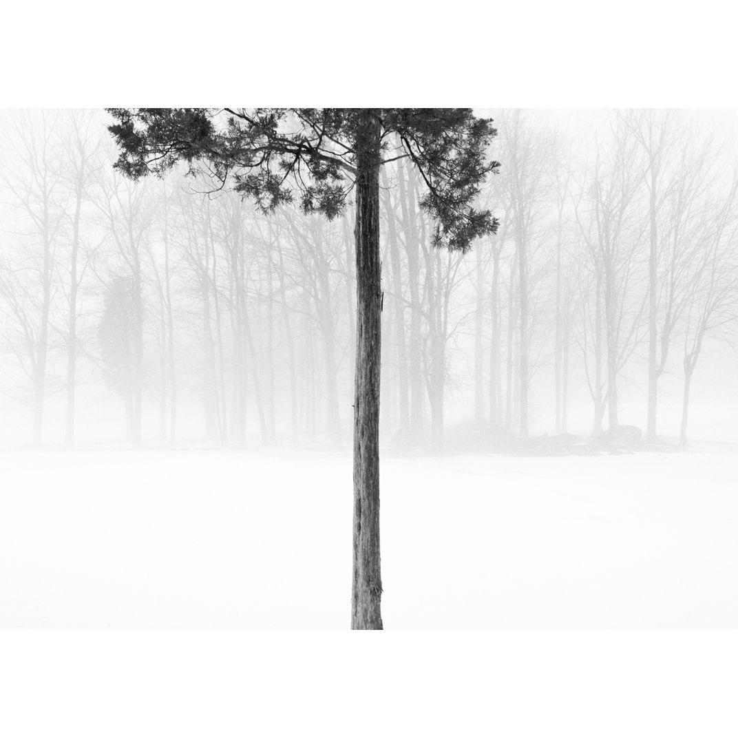 Lone Tree by Adam Garelick