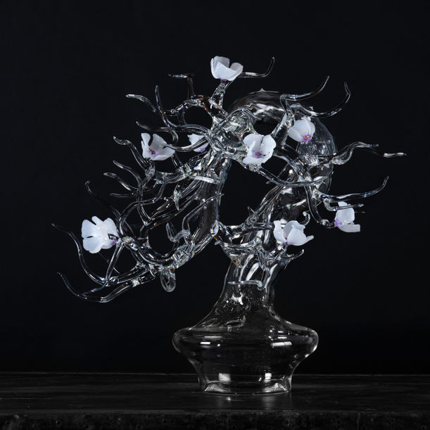 Blossom Bonsai -White by Simone Crestani