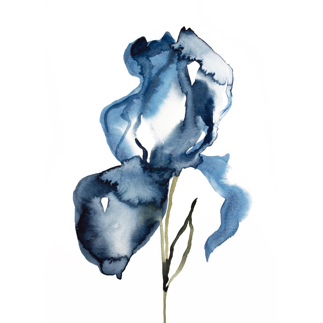 Iris No. 127 by Elizabeth Becker