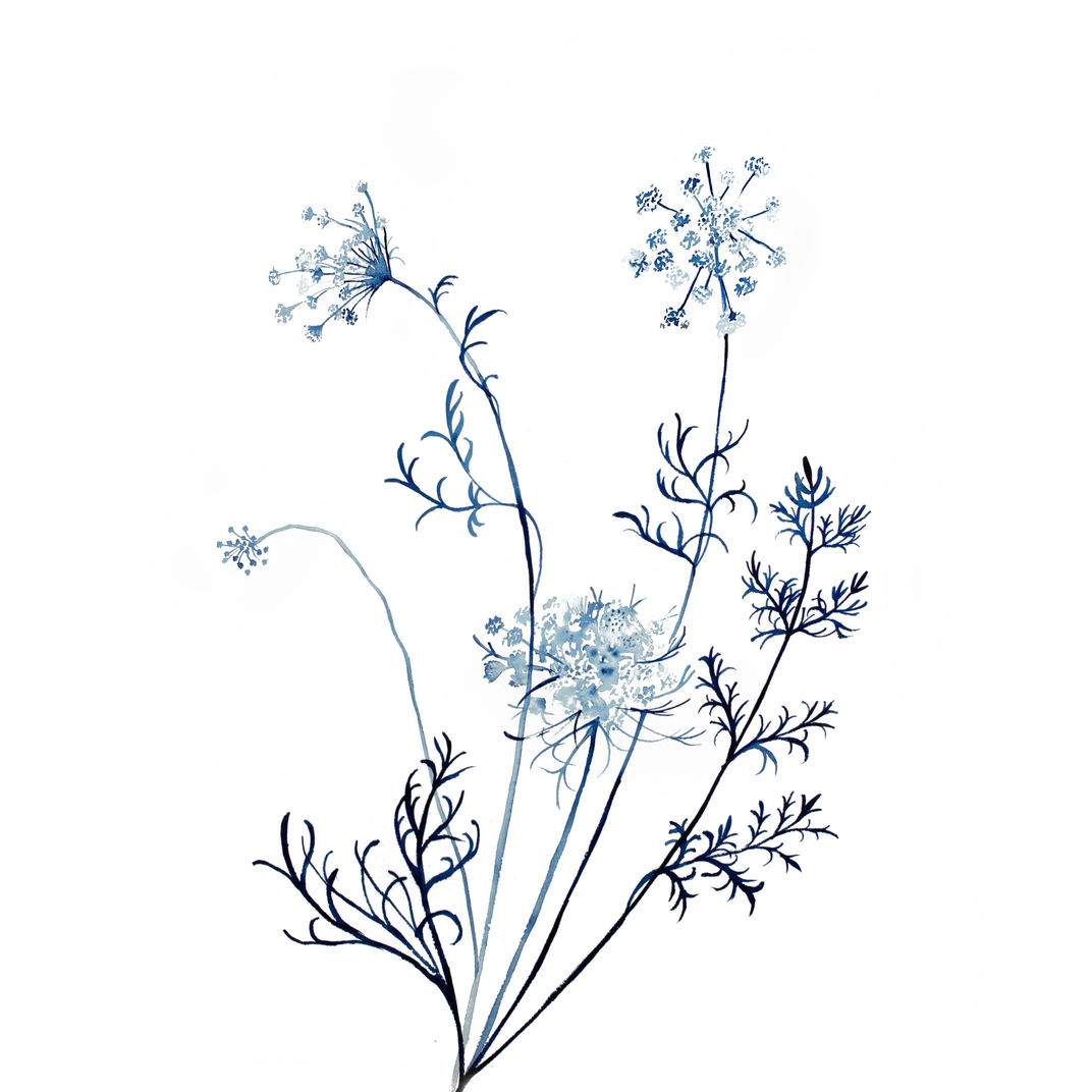 Queen Anne's Lace No. 12 by Elizabeth Becker