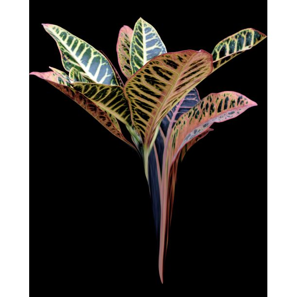 Heavenly Plants Nº04 by Sumit Mehndiratta