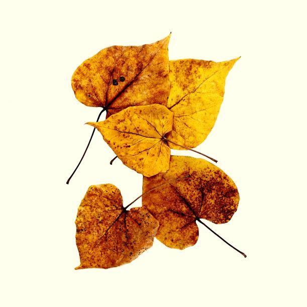 Wild Leaves II by Shafiq M