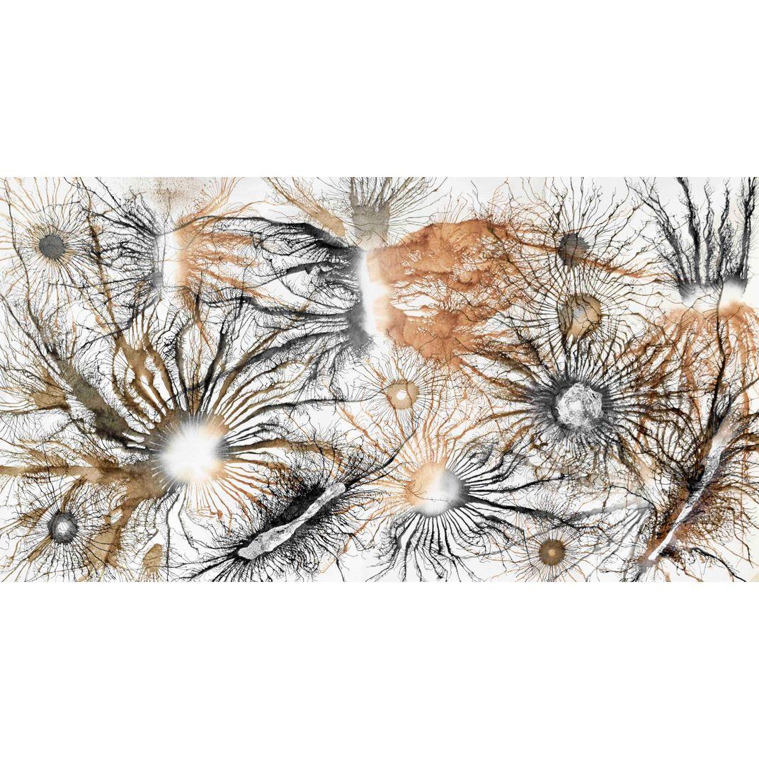 Exploflora Series No. 50 by Sumit Mehndiratta
