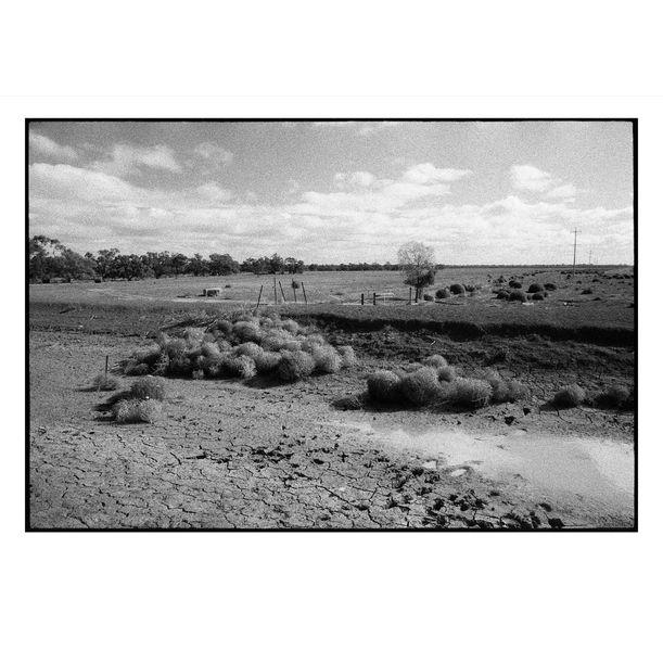 Hay Drought by Damian Seagar