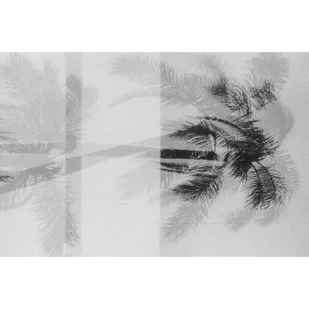 Black & White Palms IV by gutterdust