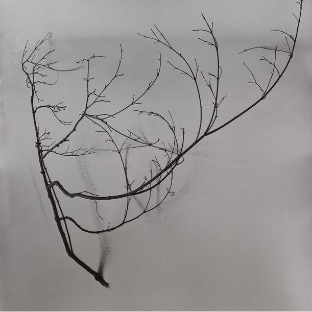 Whispers of Trees-Tea by Chu Chu