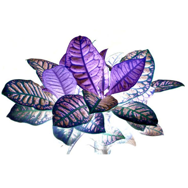 Heavenly plants Nº01 by Sumit Mehndiratta