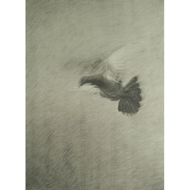 Pigeon, 鸽子 by Hong Lei