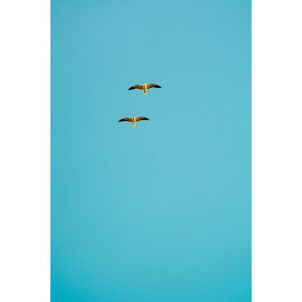 Seaside #29 by Tal Paz-Fridman