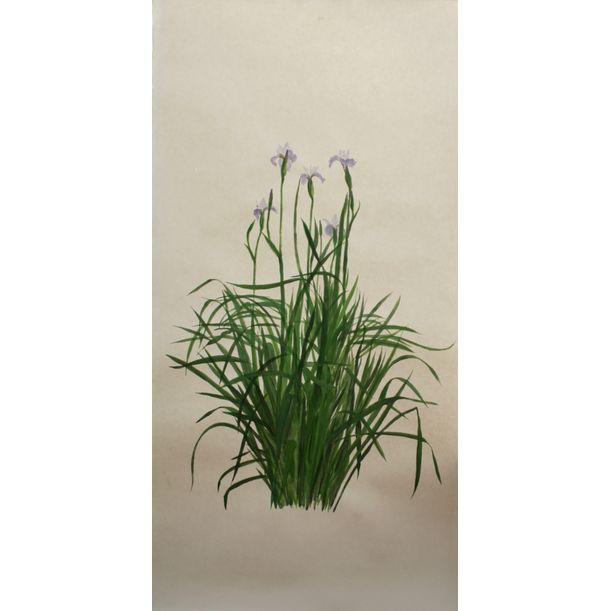 Iris Sibirica 'Pleasures of May' by Anne Mckenzie