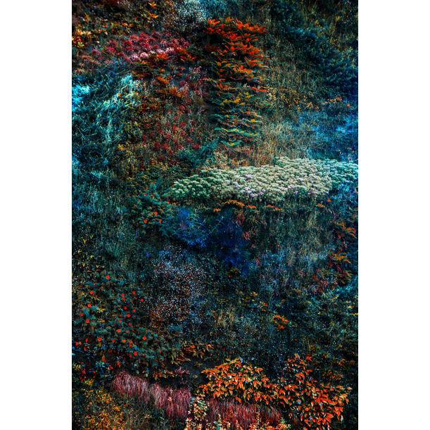 Wall of Nature V by Viet Ha Tran
