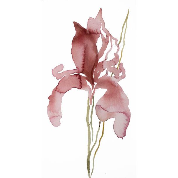 Iris No. 142 by Elizabeth Becker