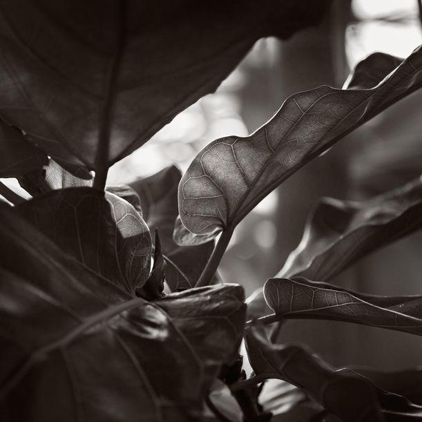 Kew Gardens_01-04-0117 by Michael Frank
