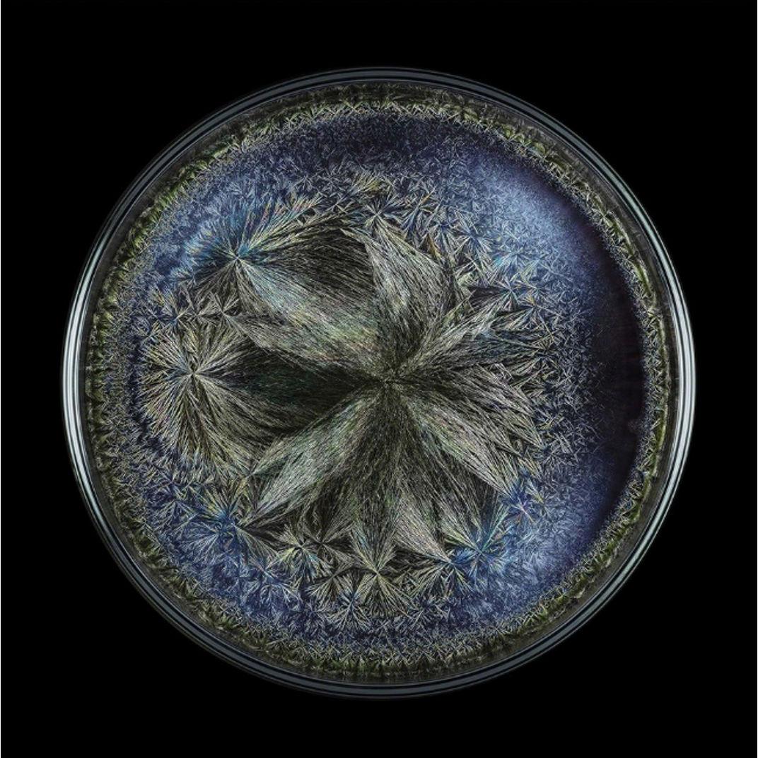 Morphogenetic Field - Beluga caviar by Seb Janiak