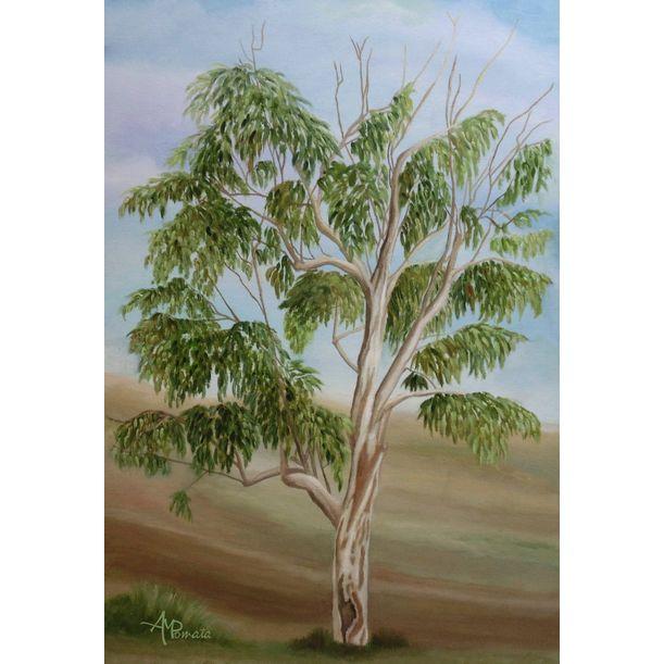 Eucalyptus by Angeles M. Pomata