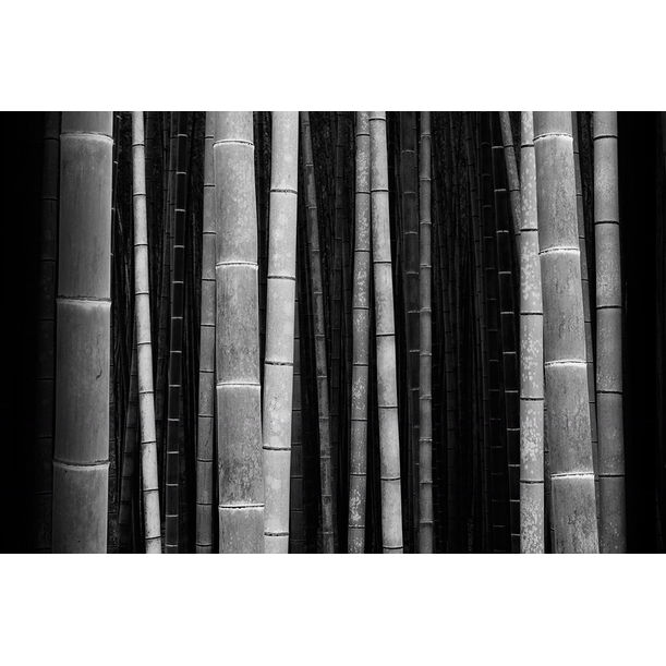Bamboo Forest by Stephen King