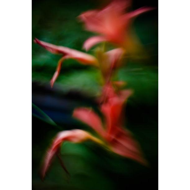 Night lilies by Larisa Siverina