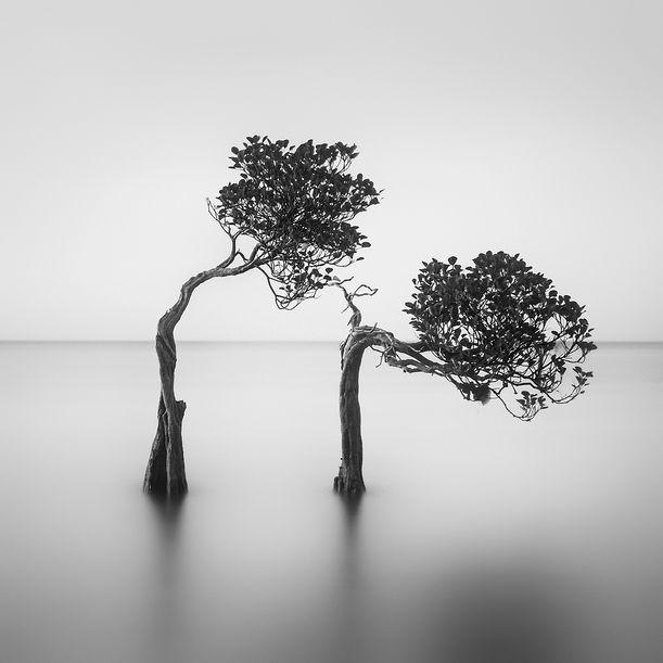 Courteous by Hengki Koentjoro