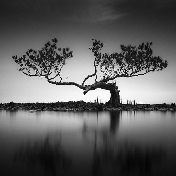 Mangrove Tree by Hengki Koentjoro