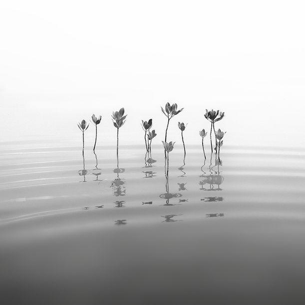 Mangroves Rhythm by Hengki Koentjoro