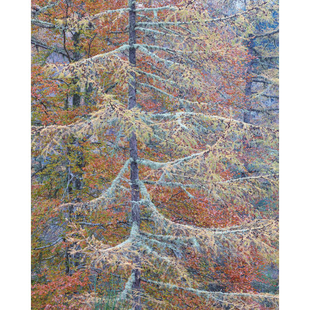 Autumn Tapestry 1 by Stephen King