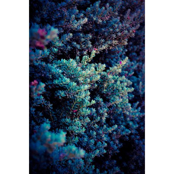 Spring by Tal Paz-Fridman