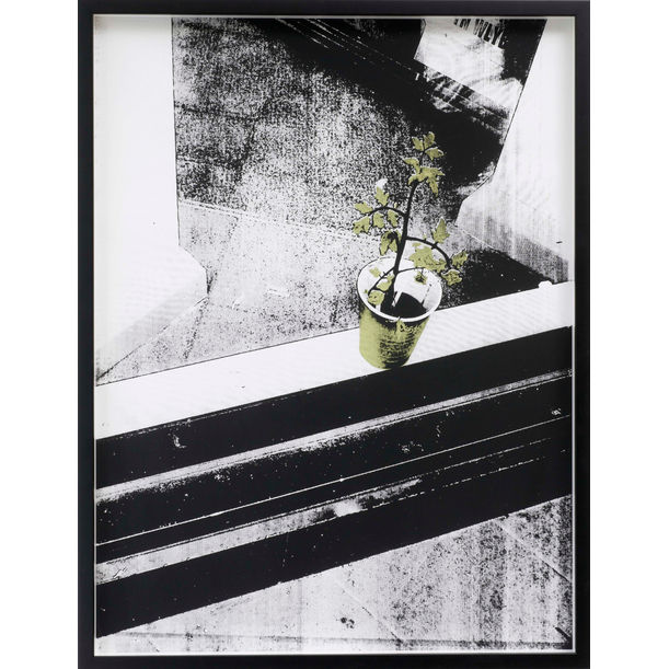 Plant Beyond the Window by Shan Hur