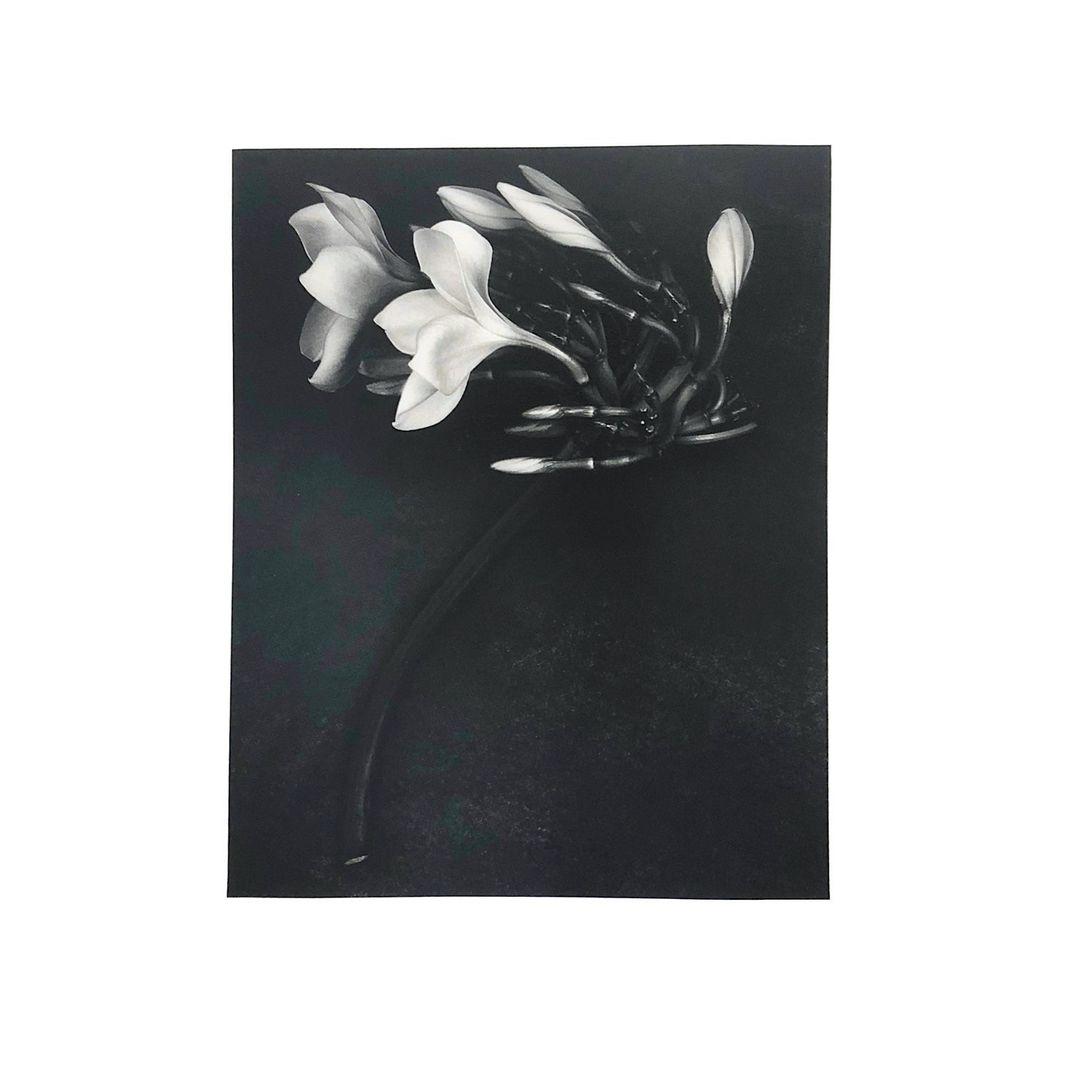 Orchid, 1988 by Albert Watson