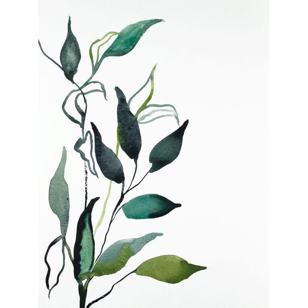 Plant Study No. 91 by Elizabeth Becker