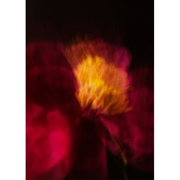 Blurred red peony by Larisa Siverina