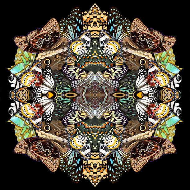 Metamorphosis by Sumit Mehndiratta