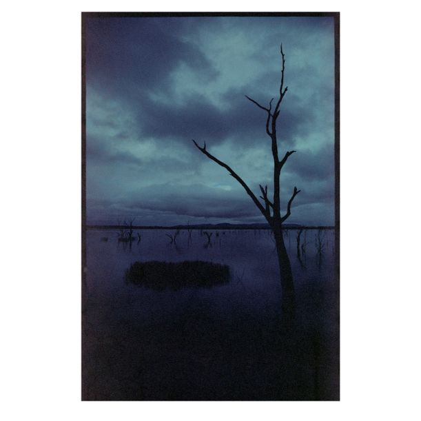 Lake Fyans Tree by Damian Seagar