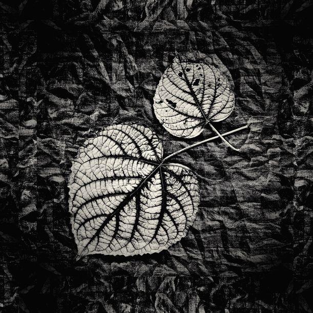 Wild Leaves VI by Shafiq M