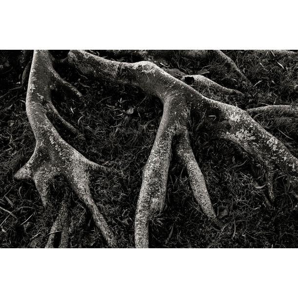 Roots II by Tal Paz-Fridman